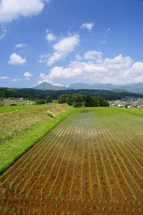 田植えの済んだ春の水田と八ヶ岳連峰の写真素材 [FYI04515151]