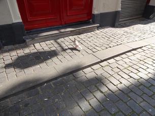 赤いドアの前の鳩  a pigen in front of red doors の写真素材 [FYI04515542]