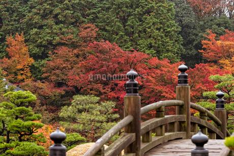 日本の紅葉の景色の写真素材 [FYI04515742]