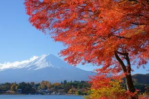 富士山と河口湖の紅葉の写真素材 [FYI04515821]