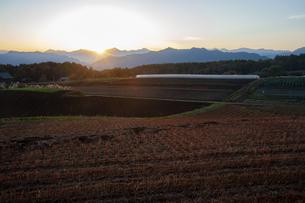 北アルプス残照とソバ収穫後の畑の写真素材 [FYI04515934]