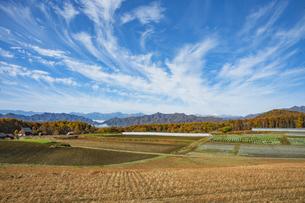 ソバ畑と紅葉と北アルプスの写真素材 [FYI04515936]