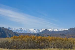 新雪の北アルプスとカラマツ紅葉の写真素材 [FYI04516171]