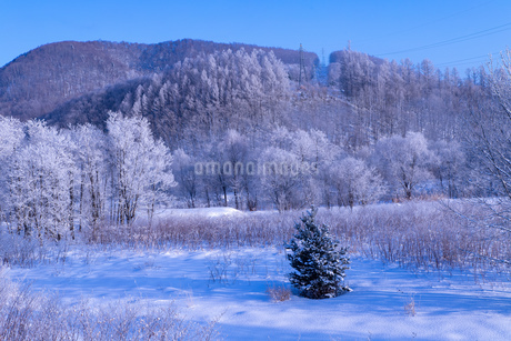 北海道の風景 富良野市の樹氷の写真素材 [FYI04516450]