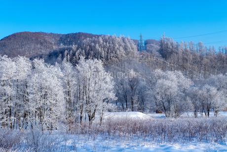 北海道の風景 富良野市の樹氷の写真素材 [FYI04516454]