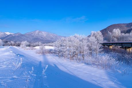 北海道の風景 富良野市の樹氷の写真素材 [FYI04516455]