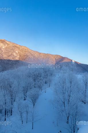北海道の風景 富良野市の樹氷の写真素材 [FYI04516456]