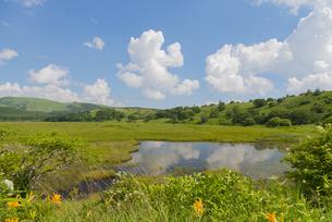 夏の八島湿原の写真素材 [FYI04516834]
