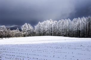 樹氷の防風林と畑の新雪の写真素材 [FYI04516970]