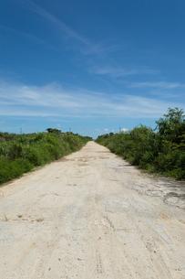 両側が緑の舗装されていない直線の白い一本道の写真素材 [FYI04517053]