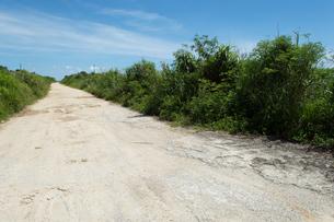 両側が緑の舗装されていない直線の白い一本道の写真素材 [FYI04517073]