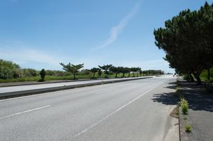 街路樹が並ぶ直線の綺麗なアスファルトの道路の写真素材 [FYI04517146]