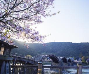 山口県 桜 錦帯橋 夕景の写真素材 [FYI04517173]