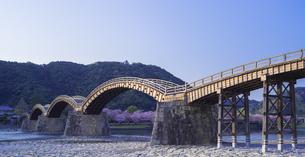 山口県 桜 錦帯橋 夕景の写真素材 [FYI04517180]