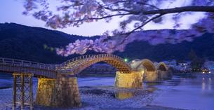 山口県 桜 錦帯橋 夕景の写真素材 [FYI04517183]