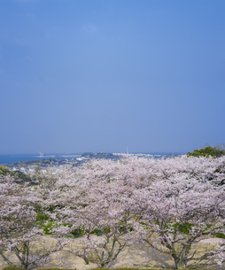 山口県 桜 戦場ヶ原公園の写真素材 [FYI04517205]