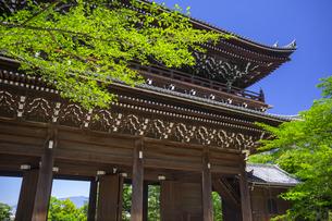 知恩院の三門と新緑の写真素材 [FYI04517236]