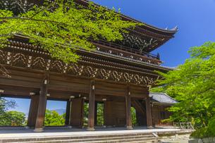 知恩院の三門と新緑の写真素材 [FYI04517237]