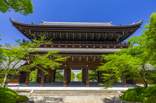 知恩院の三門と新緑の写真素材 [FYI04517238]