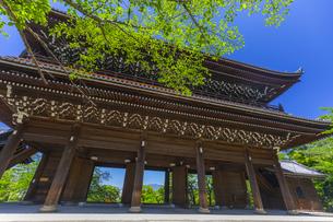 知恩院の三門と新緑の写真素材 [FYI04517241]