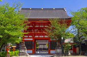 八坂神社の南楼門と新緑の写真素材 [FYI04517244]