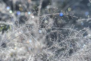 霜と七色の朝日の写真素材 [FYI04517302]