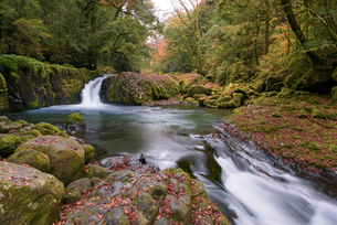 晩秋の菊池渓谷 黎明の滝の写真素材 [FYI04517319]