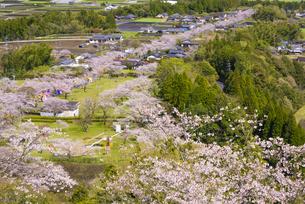 桜咲く母智丘公園の写真素材 [FYI04517337]