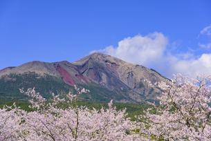 桜の高千穂の峰の写真素材 [FYI04517339]