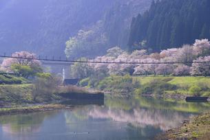 桜の市房ダムの写真素材 [FYI04517343]