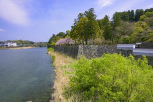 桜咲く人吉城跡の写真素材 [FYI04517347]