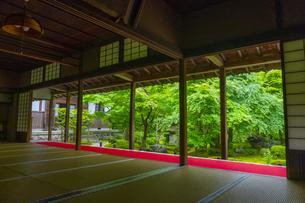圓光寺・本堂から見る新緑の庭園の写真素材 [FYI04517570]
