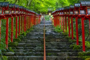 貴船神社の参道の写真素材 [FYI04517587]