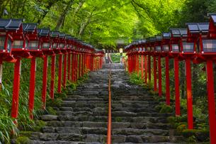 貴船神社の参道の写真素材 [FYI04517590]