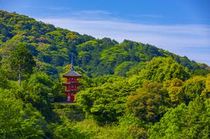 初夏の新緑の中に建つ清水寺の子安塔の写真素材 [FYI04517595]