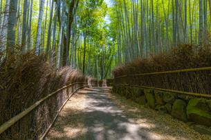 初夏の竹林の小径の写真素材 [FYI04517616]