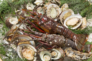 伊勢海老と魚貝類の写真素材 [FYI04518238]