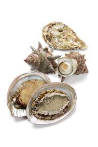 鮑と栄螺と牡蠣の写真素材 [FYI04518241]
