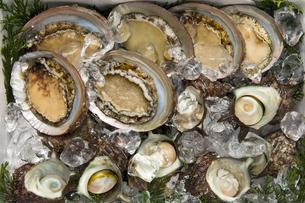 魚貝類詰め合わせの写真素材 [FYI04518250]