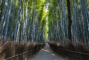 京都・嵐山「竹林の道」の写真素材 [FYI04518289]