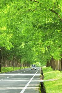 緑のメタセコイア並木に軽トラックの写真素材 [FYI04518395]