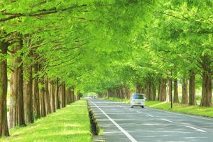 緑のメタセコイア並木に軽トラックの写真素材 [FYI04518400]