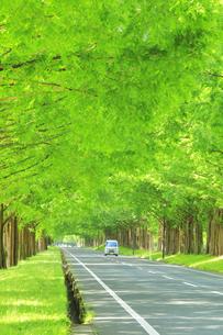 緑のメタセコイア並木に軽四輪の写真素材 [FYI04518401]