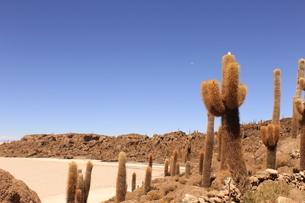 ウユニ塩湖 サボテンと青空3の写真素材 [FYI04518464]