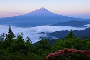 山梨県 新道峠より富士山とツツジの写真素材 [FYI04519276]
