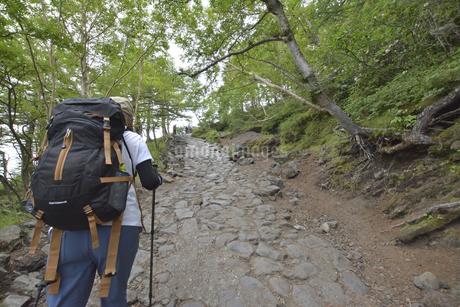 富士山を登山する女性の後ろ姿の写真素材 [FYI04520624]