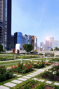 バラの公園と超高層ビルの写真素材 [FYI04521009]