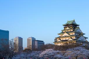 大阪城と夜桜の写真素材 [FYI04521496]