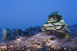 大阪城と夜桜の写真素材 [FYI04521499]