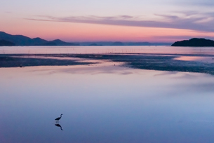一羽の鳥の居る海の夕景の写真素材 [FYI04522477]